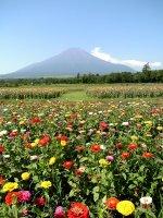 花畑と富士